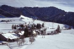 Unter Wappenswi, hinten Schwarzweid - Platte  - Holenstein