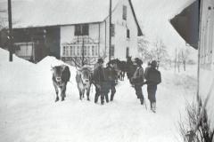 'Wappenswiler-Pfader mit Kartonnasen