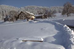 Schwarzweid im Winter